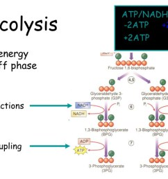 image 1 the cellular respiration showing glycolysis in a diagram presentation picture source i stack imgur com [ 1418 x 1011 Pixel ]