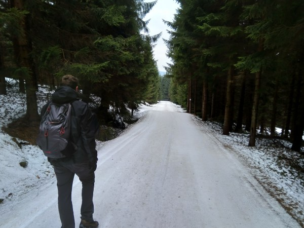 Into the wood :)