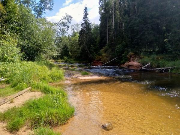 Rwący nurt rzeki Gauja