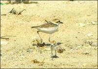Birds of LBU.tif