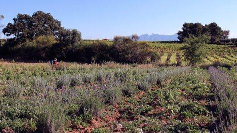 Biodiversidad en las viñas_1