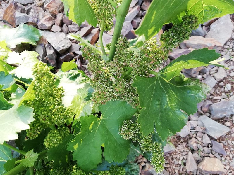 floracion 2