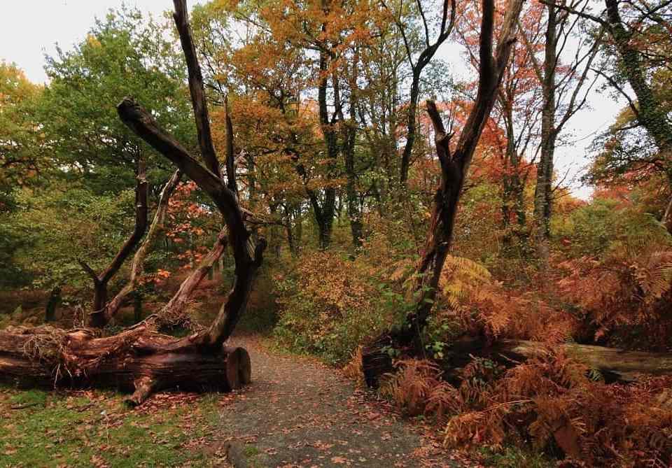 bosques-y-senderos-de-navarra-3