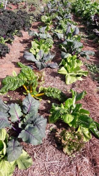 2017 octobre asso légumes