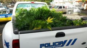 Marihuana Policia