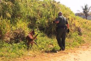La búsqueda de más indocumentados continuaba en horas de la mañana (Archivo)