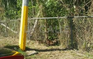 """Hueco en la verja por donde se alega que la gente sale a hacer sus necesidades, junto al pulguero de Cabo Rojo. Haga """"click"""" sobre la imagen para ampliarla (Suministrada)."""