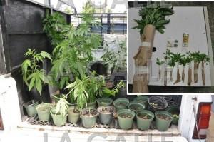 Marihuana confiscada en Isabela (Suministrada Policía).