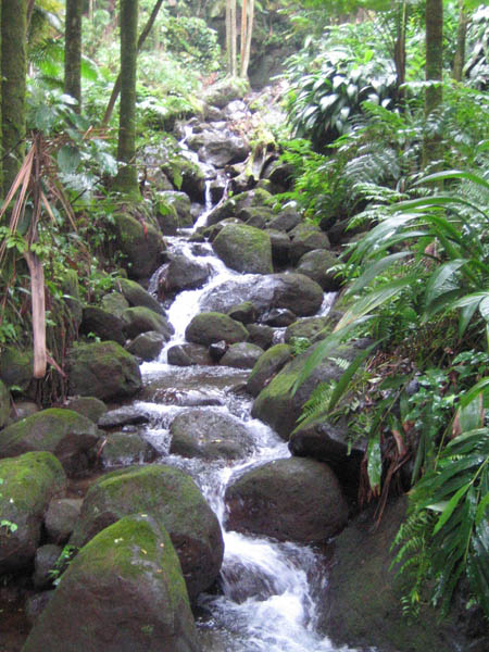 Cascades du Jardin du Singapore botanical garden  les plus belles cascades artificielles