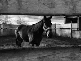 Cavallo in tondino