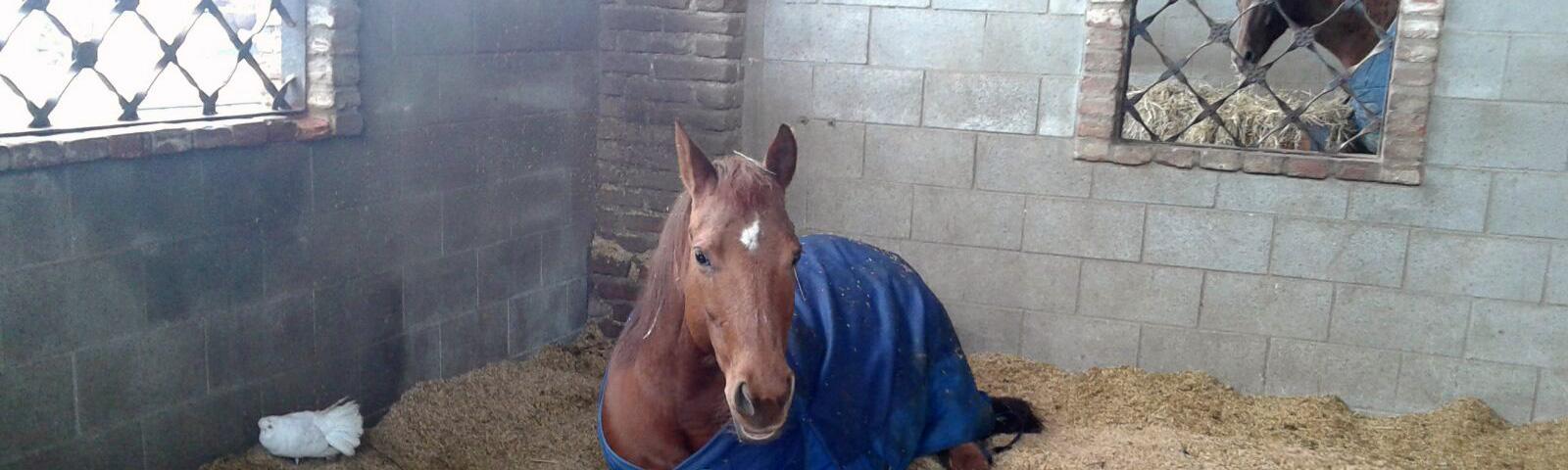 Pensione cavalli scuderizzazione in box e paddock