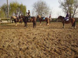 Un gruppo di allievi durante la lezione di equitazione con i cavalli