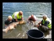 Remise à l'eau sur le barrage de la Rive ! ...