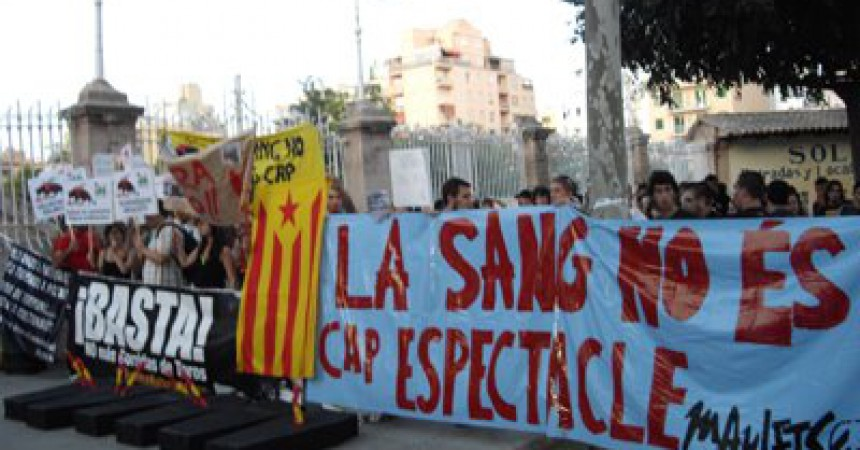 Image result for mallorca sense sang