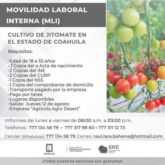SNE Morelos - Cultivo de jitomates