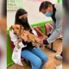 Morelos participa en la Jornada Nacional de Vacunación Antirrábica Canina y Felina, donde esperan aplicar 19 mil vacunas