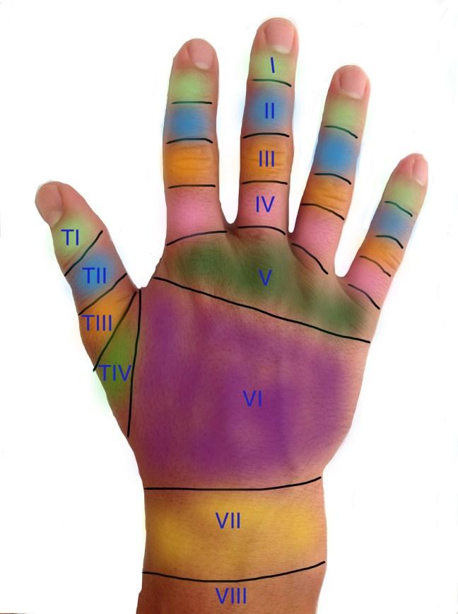 hand zones