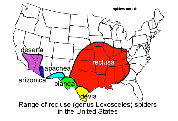 recluse spiders in the US.png