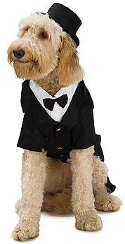 HOLIDAY, PARTY AND FORMAL ATTIRE DOGGIE STYLE, for your ...