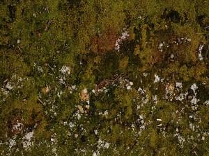 mossy floor drop texture photo backdrop