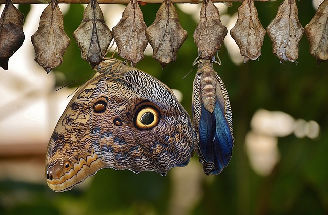 cocoons-329070_640