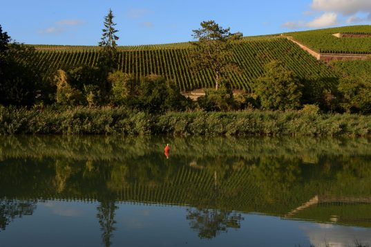 Le superbe vignoble de Mareuil-sur-Aÿ.