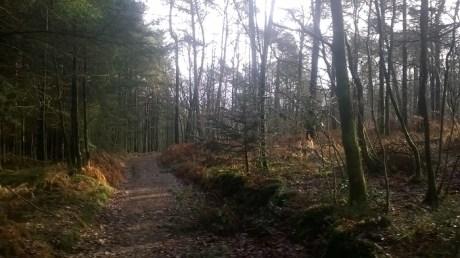 traversée de la forêt de multonne
