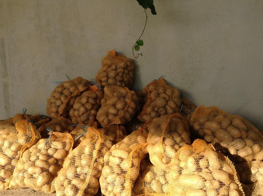 les patates de la Chènevétrie disponibles en filet
