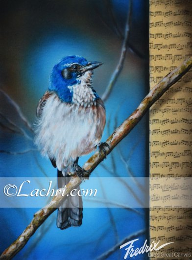 Western Scrub Jay acrylic/mixed media painting