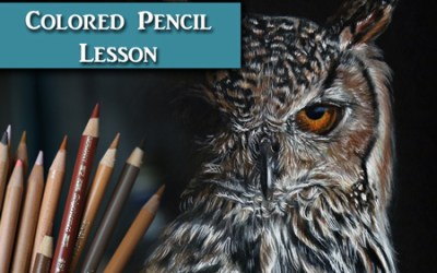 How to draw an Owl in Colored Pencil