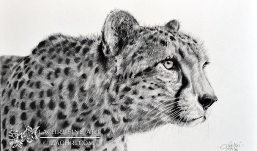 Cheetah graphite drawing