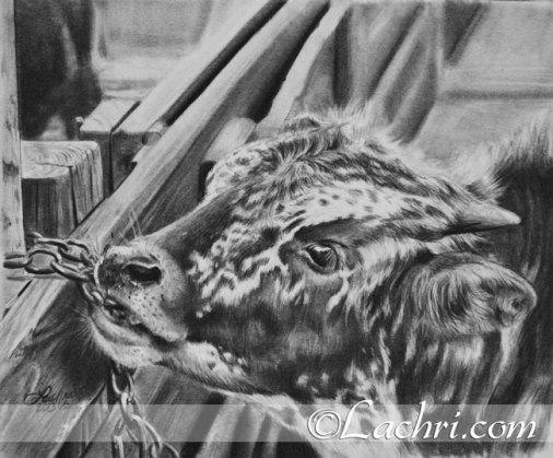 Baby longhorn graphite (pencil) portrait