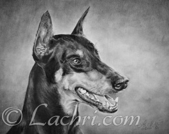Doberman graphite portrait