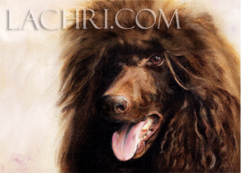 Poodle oil painting