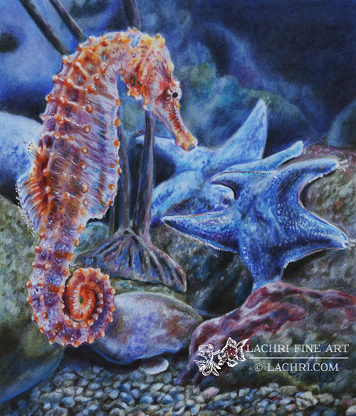 Seahorse and starfish in colored pencil