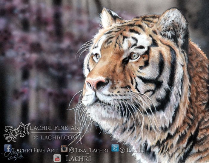 Tiger in colored pencil