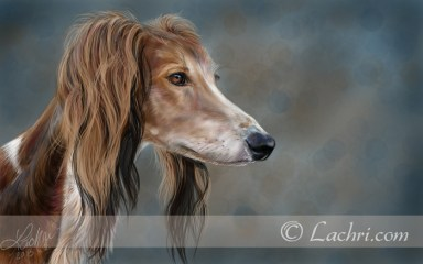 Saluki digital painting