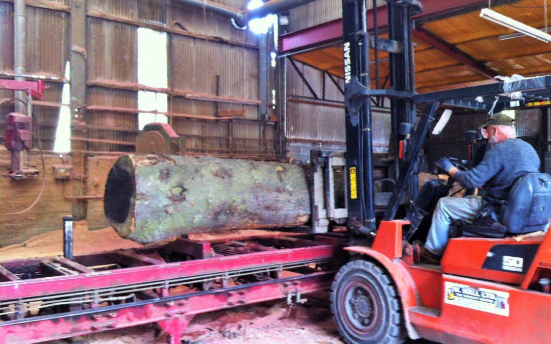 A trip to the sawmill