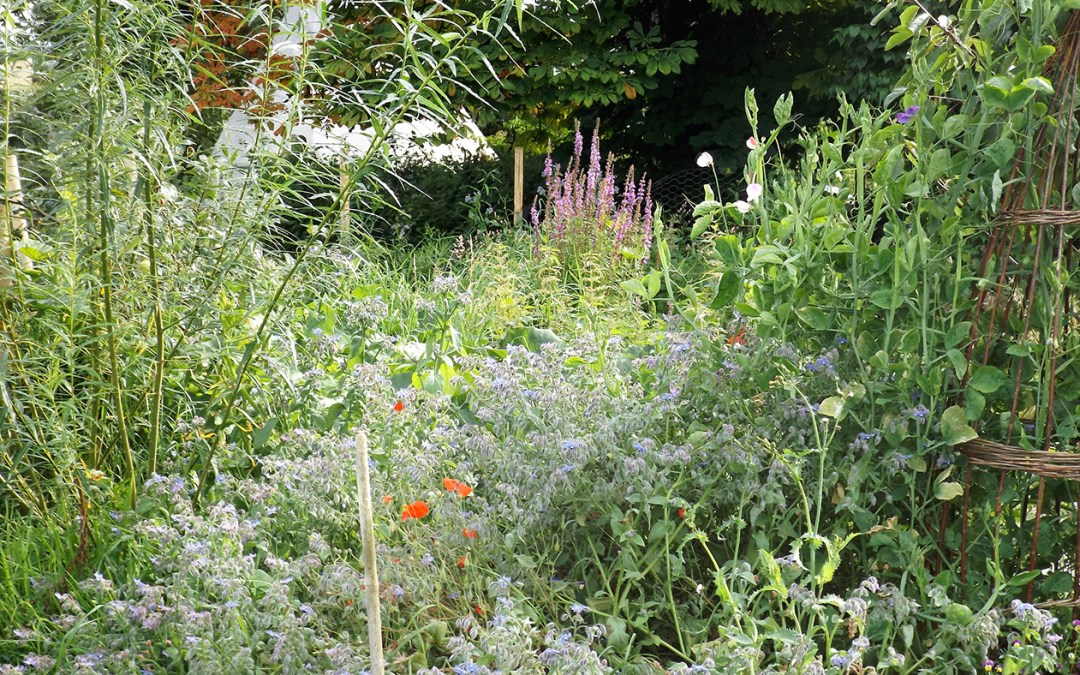 Late summer in the gardens