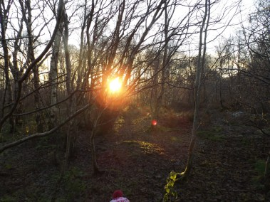 Sunset in the birchwoods