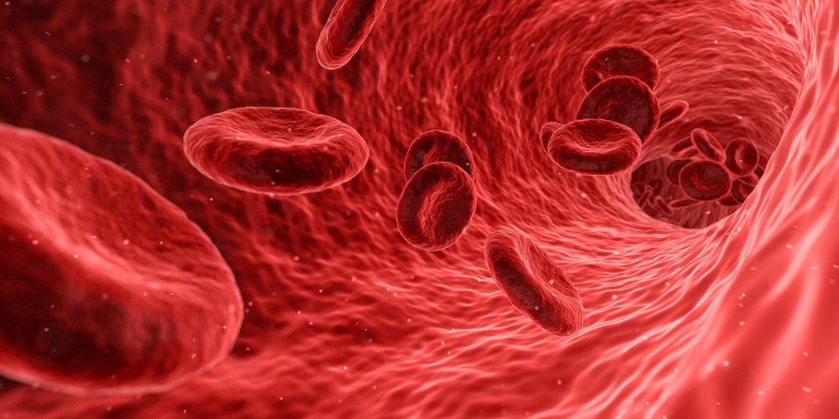 Système sanguin