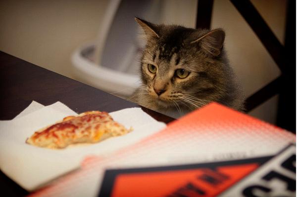 Gatos locos por las pizzas  La cocina de Bender
