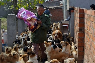 Mujer china mantiene 1500 perros y 200 gatos  La cocina