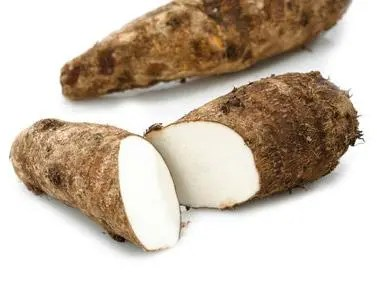 malanga-blanca2