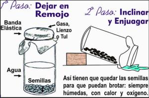 alimentos germinados-La Cocina Ortomolecular