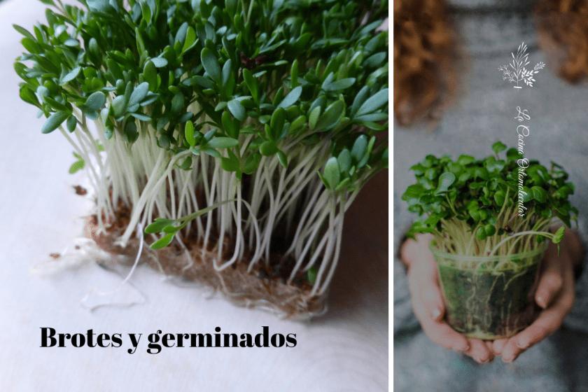 Brotes y germinados - La Cocina Ortomolecular