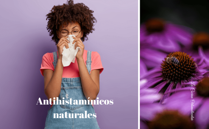 Los 4 mejores antihistamínicos naturales
