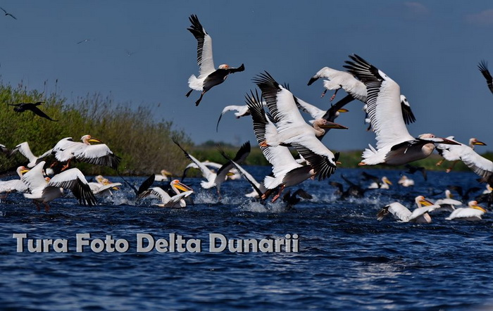 Tura Foto – Delta Dunarii 2020