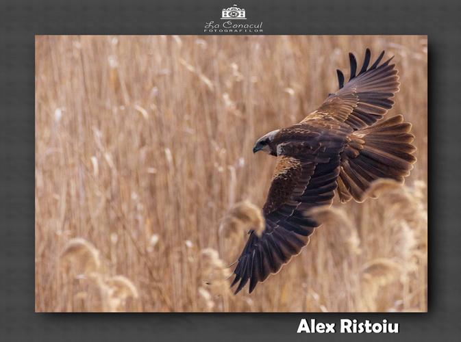ALEX RISTOIU resize 1
