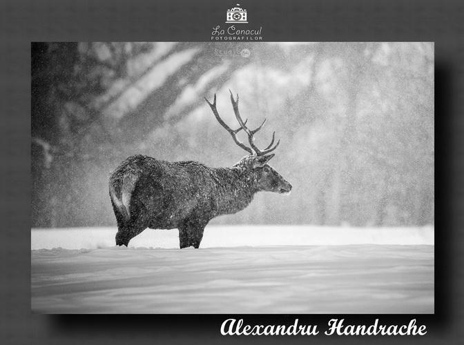 ALEXANDRU HANDARACHE resize